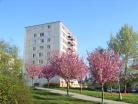 Panelový dům Kohoutovice, Brno